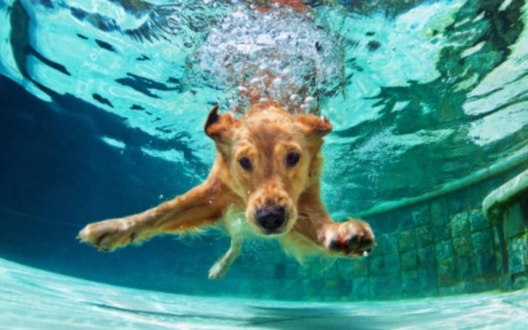 Perros en la piscina, los peligros de meterlos