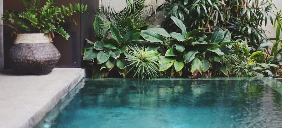Plantas en la piscina