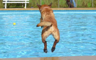 ¿Mascotas en la piscina? Consejos y recomendaciones