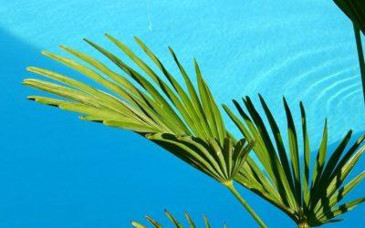 Ideas de plantas para piscina para dar un toque tropical