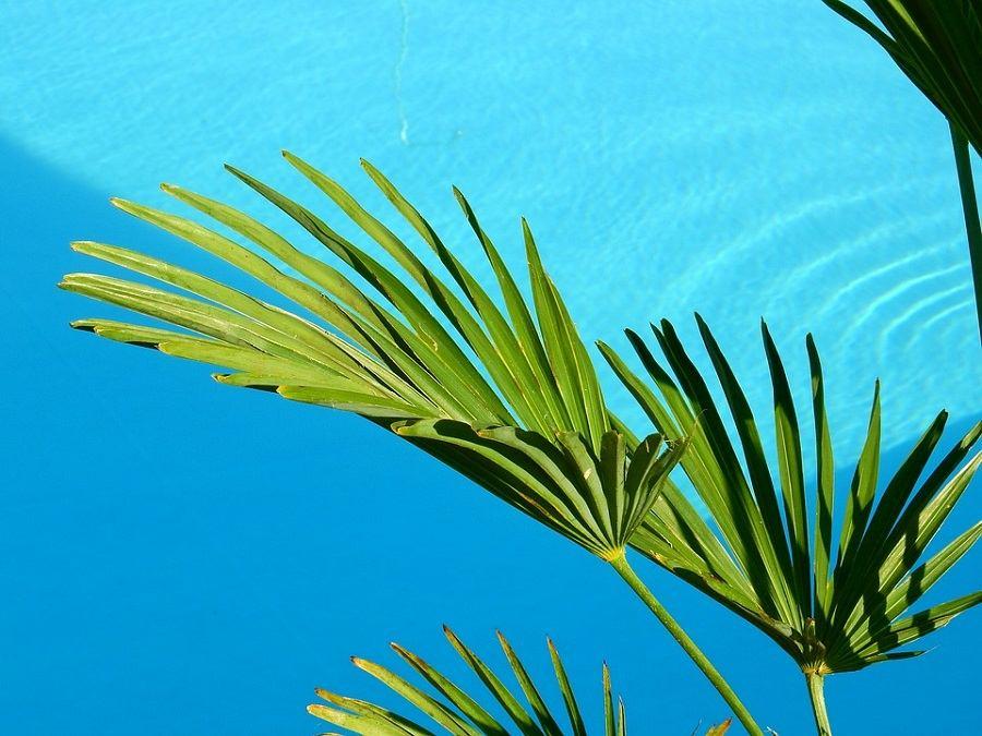 plantas para piscina